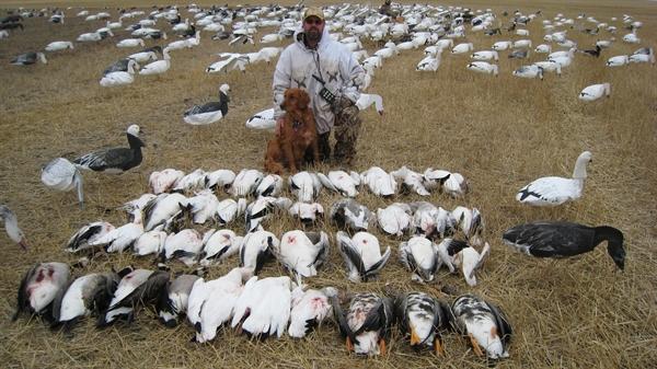 canada goose online flashback