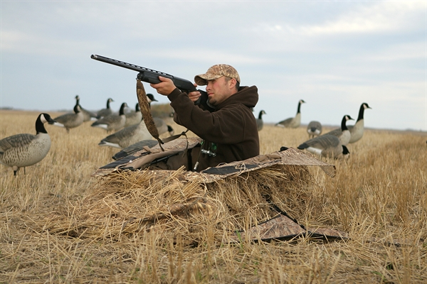 kit blinds layout killerweed hunting all gear terrain blind dp avery