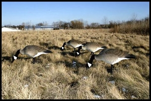 Picture of Honker Feeder Canada Goose Decoys (BF112477) by Bigfoot Decoys