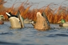 Picture of Oversize Butt-up Mallard Feeder Duck Decoys (AV71000) by Greenhead Gear GHG Avery Outdoors