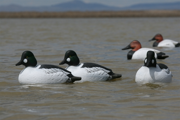 Prairiewind Decoys Free Shipping Over Sized Goldeneye