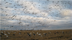Picture of **FREE SHIPPING**SNOWS ON THE PRAIRIE 8.1 DIGITAL  AUDIO DOWNLOAD