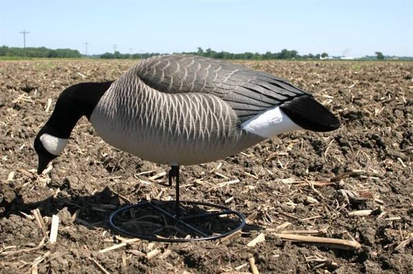 zink avian-x flocked full-body canada goose decoys