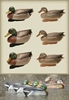 Picture of MALLARD FLOATING DUCK DECOYS 6 pk. (474270) by Final Approach Decoys