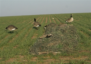 Prairiewind Decoys Killerweed Layout Blind Kit By Avery