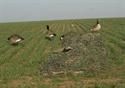 Picture of Winter Wheat - AV47304