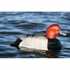 Picture of **FREE SHIPPING** Over-Sized Redhead Duck Decoys (AV73029) by Greenhead Gear GHG Avery Outdoors