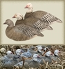 Picture of **BLOWOUT SALE** BLUE GOOSE UPRIGHT SHELL Decoys 12 PACK (474197) by Final Approach Decoys