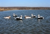 Picture of ProGrade Long Tailed Ducks (74007) by Greenhead Gear GHG Avery Outdoors