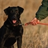 Picture of  Standard Dog Leashes By Avery Outdoors Greenhead Gear GHG