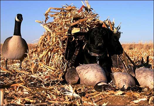 Prairiewind Decoys Finisher Dog Blind In Kw1 Av01429 By