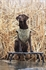 Picture of Junior Ruff Stand (AV90018) By Avery Outdoors Greenhead Gear GHG