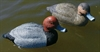 Picture of SUPER MAGNUM Swivel REDHEAD Duck Decoys 6pk (RH10SM) by G&H Decoys
