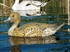 Picture of **FREE SHIPPING** X-treme Pintail Floater Duck Decoys 12pk  (DAK13150) by Dakota Decoys