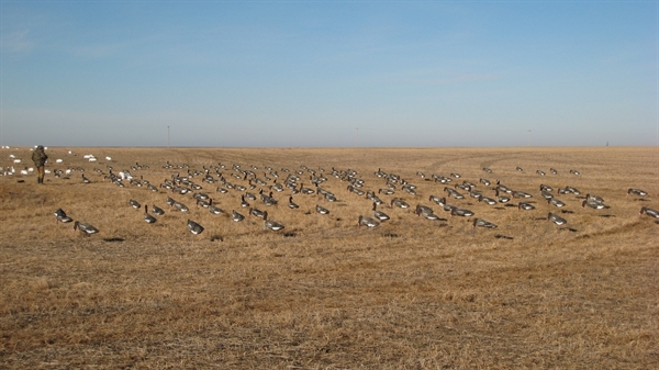 Big Foot Decoys Big Foot Flocked Head Canada Feeder Goose