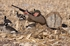 Picture of **SALE** Power Hunter Layout Blind (AV01456) KHAKI by Avery Outdoors