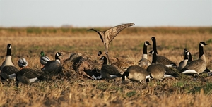 Picture of Canada Goose Power Flag KW1 backed (AV71539) by Avery Outdoors Greenhead GHG