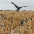 Picture of  Canada Goose Power Flag (AV71530) by Avery Outdoors Greenhead GHG