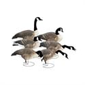 Picture of FFD Honkers - Harvester 6pk w/bag