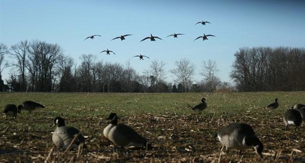 Canada Goose parka replica price - Prairiewind Decoys. **SALE** Tim Newbold FFD Lesser Canada Goose ...