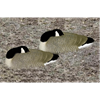 Picture of Bigfoot Canada Goose Shells