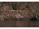 Picture for category Duck Boat Hunting Accessories