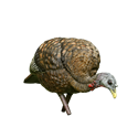 Picture of LCD Feeder Turkey - HEN -AVX8007