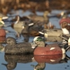 Picture of Life Size American Wigeon Duck Decoys by Greenhead Gear