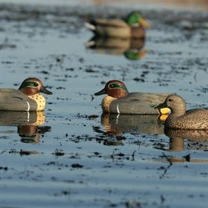 Picture of **SALE** Life Size Green-Winged Teal Duck Decoys (AV73021) By Greenhead Gear GHG Avery Outdoors