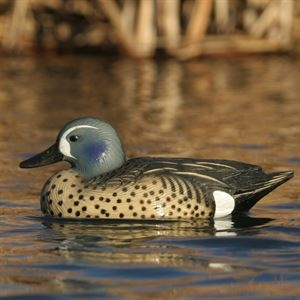 Picture of **SALE** Life Size Blue-Winged Teal Duck Decoys (AV73025) -  By Greenhead Gear GHG Avery Outdoors