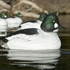 Picture of **FREE SHIPPING** Over-Sized Goldeneye Duck Decoys (AV73047) by Greenhead Gear GHG Avery Outdoors
