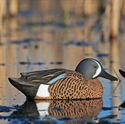 Picture for category Teal Decoys-SALE!