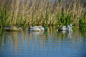Picture of  **FREE SHIPPING** Pro-Grade Mallard Feeder 6 Pack Combo AV73192 by Greenhead Gear GHG Avery Outdoors