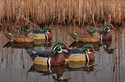 Picture for category Wood Duck Decoys