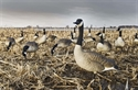 Picture for category Honker Decoys