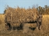 Picture of Avian-X TV Season 1 DVD (01742) by Avian-X Decoys Zink Calls