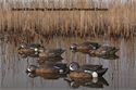 Picture of Blue Winged Teal 6pk - AVX8080
