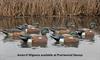 Picture of Top Flight Wigeon Duck Decoys 6pk by Avian X Decoys