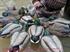 Picture of **FREE SHIPPING** Pro-Grade Early Season Mallard Hen 6 Pack (AV73105) by Greenhead Gear GHG Avery Outdoors