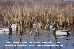 Picture of **Free Shipping** Pro-Grade January Mallard Active 6-Pack (AV73161) by Greenhead Gear GHG Avery Outdoors