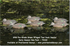 Picture of **FREE SHIPPING** Pro-Grade Green-Winged Teal Early Season Hen Duck Decoys - 6 Pack (AV73122) By Greenhead Gear GHG Avery Outdoors