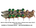 Picture of PG Fullbody Mallard Harv. 12 Pack - Flocked heads