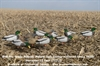 Picture of **FREE SHIPPING** Pro-Grade Full Body Mallard Harvester 12 pack w/Flocked Drake Heads (AV72217) by Greenhead Gear GHG Avery Outdoors
