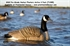 Picture of **FREE SHIPPING** Pro-Grade Canada Goose Honker Floater HARVESTER  6pk (AV71083) by Greenhead Gear