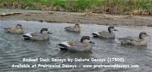 Picture of **FREE SHIPPING** Gadwall Duck Decoys by Dakota Decoys