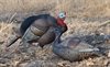 Picture of **FREE SHIPPING** X-treme Turkey Breeder Pack  - 1 Jake and 1 Hen (13300) by Dakota Decoys