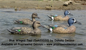 Picture of **FREE SHIPPING** Blue Wing Teal Duck Decoys 6 pk (DAK20020) by Dakota Decoys