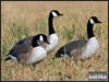 Picture of **FREE SHIPPING** FFD Full Body Honker Active 6 pk w/BAG (AV71574) by Greenhead Gear GHG Avery Outdoors