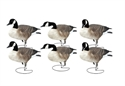 Picture of FFD Honkers - Active 6pk w/bag
