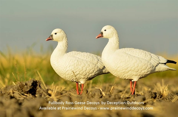 Prairiewind Decoys  **SOLD OUT** Ross Goose Fullbody Goose